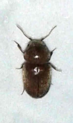 Käfer Biss