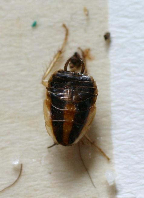 Hat Jemand Eine Idee Was Das Für Insekten Sind Mikrocontrollernet