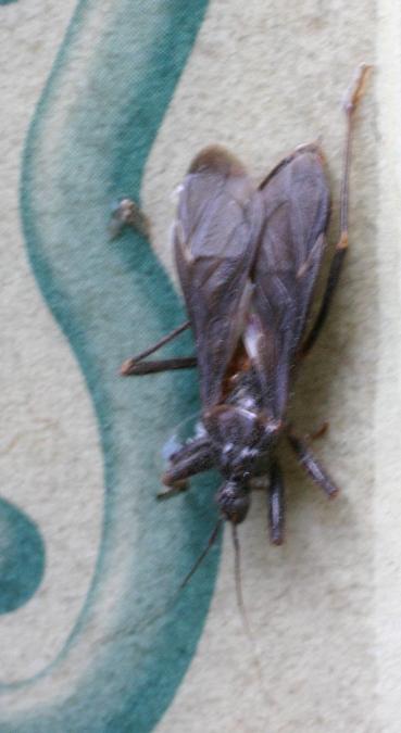 Insekten schabenähnliche Evolution von