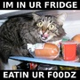 preview image for cat_food_fridge.jpg