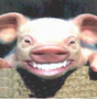 preview image for pig.jpg