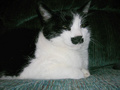preview image for kitler1217.jpg