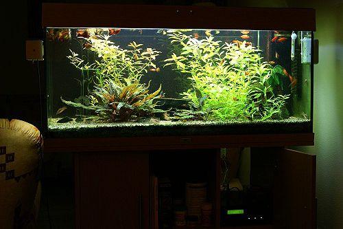 Aquarium Complete.jpg